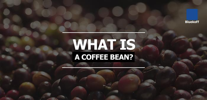What is a Coffee Bean?