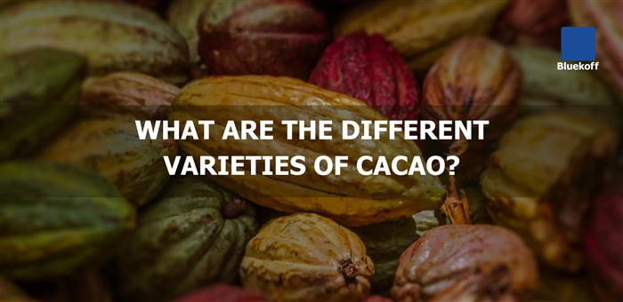 What are the different varieties of cacao?