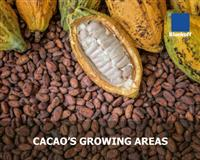 Cacao's growing areas