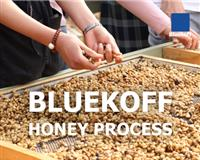 Bluekoff Honey Process